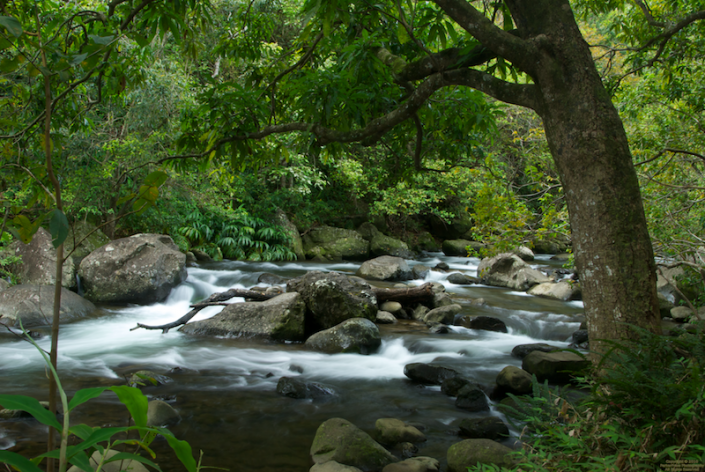 River at the Iao Needle