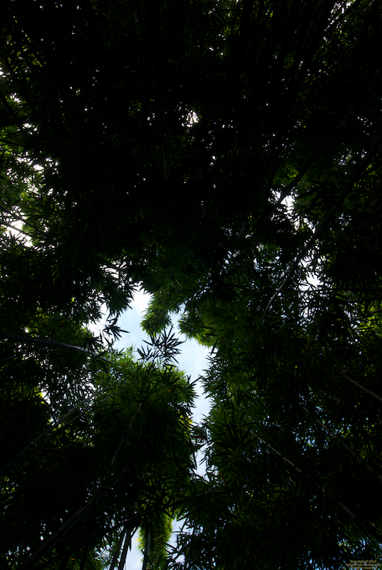 Looking up at bamboo ceiling
