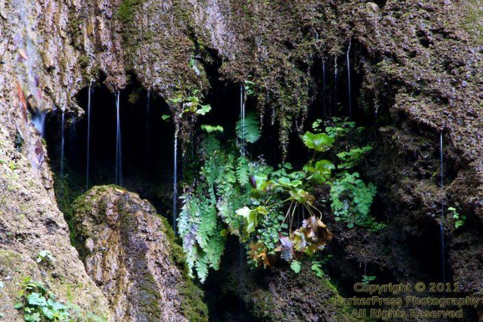 Hanging on - Nojoqui Falls